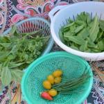 {Wordless Wednesday} Spring Harvest Day